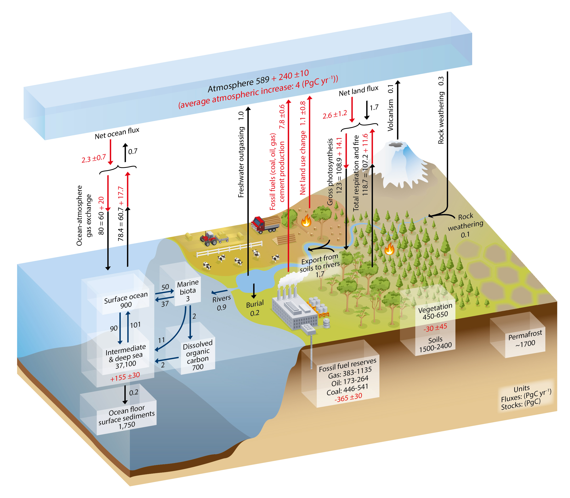 Carbon cycle labeled diagram of none auto electrical wiring diagram carbon cycle labeled diagram of none images gallery ccuart Choice Image